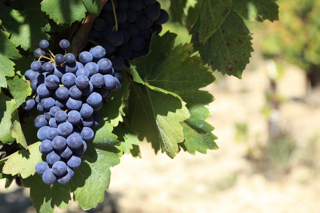Sommelier Giulia Cosenza sui vini calabresi