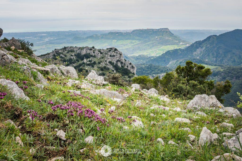 Monte Mutolo, Aspromonte